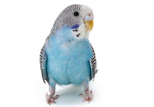 un-bonito-periquito