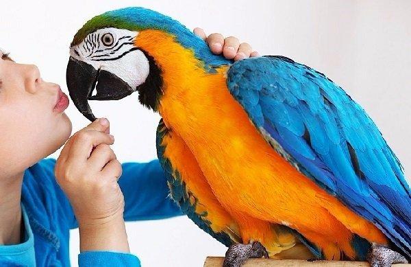 Las aves exóticas como mascotas