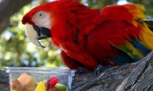 Diversidad y variedad en la dieta de un ave exótica
