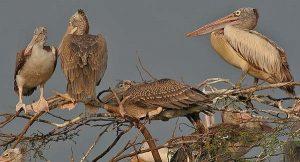 Nepal: observadores de aves