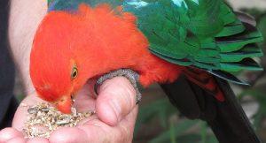 sobrealimentando un ave exotica